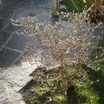 images/gartensitzplaetze/Gartensitzplaetze_17.jpg